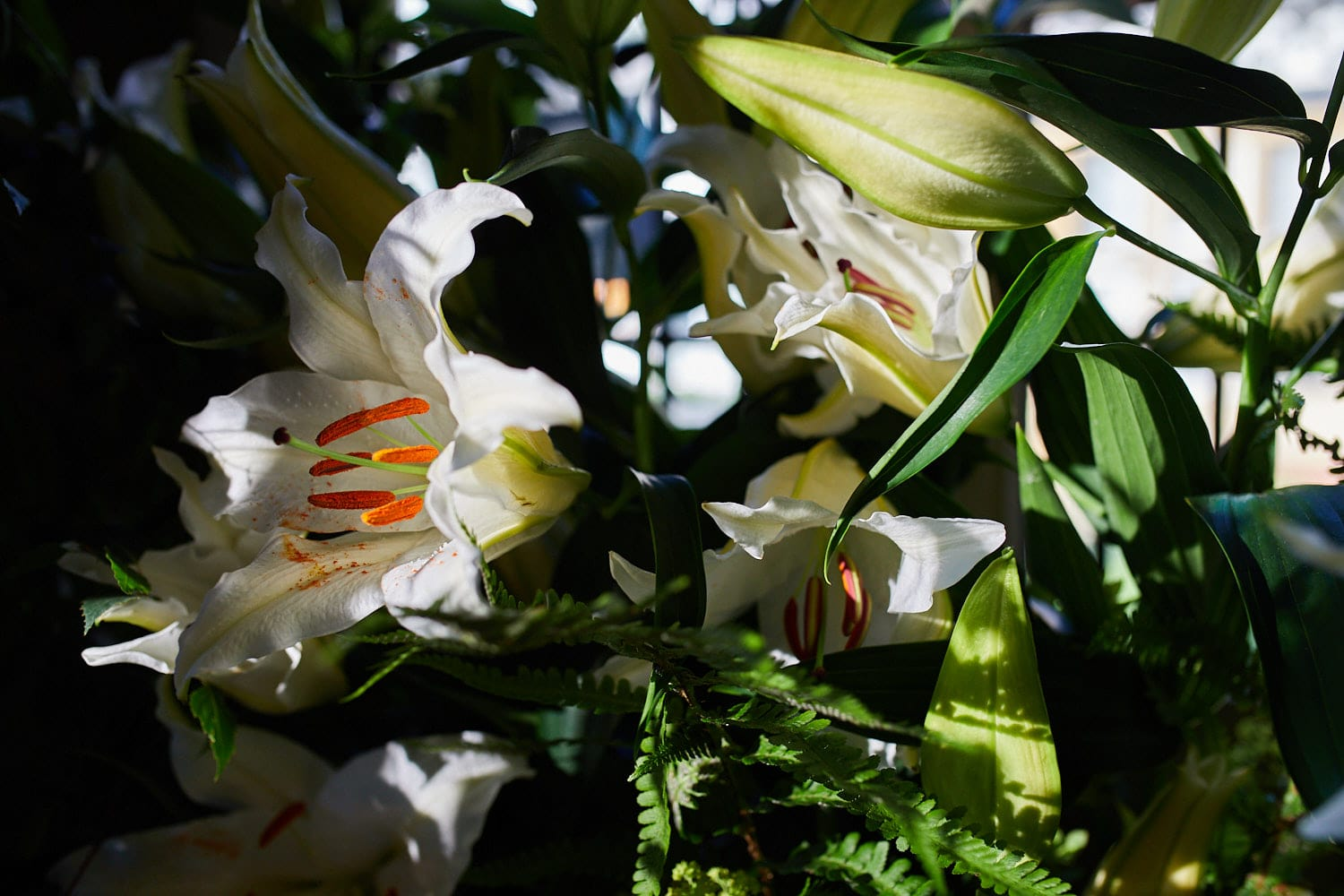 A close of up flowers from a wider display